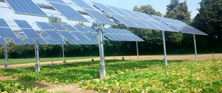 Agrofotovoltaica: combinando fotosíntesis y fotovoltaica