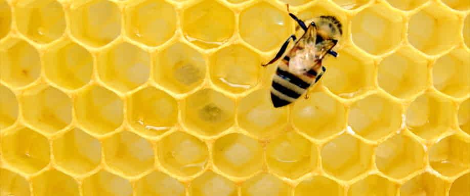 ¿La energía solar puede salvar a las abejas?